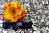 Nina Ricci Watch (Zahraa Maher ♥) Tags: new pink flowers amanda flower color colors rose canon photography rainbow model flickr sister d tiger watch some pic visit ricci madness 600 nina 1855mm rainbows plz الله comment maher ♥ zahra ehsan زهرة غروب صورة تصوير 600d ماشاء وردي بين للطفولة أخر اسود my zahraa ألوان اسد مغامرات السنافر معنى لون سيلويت إحسان زهراء ماهر سنفور مغامرة فيونكة عينيكِ alnemer نمر♥ النمرآل httpwwwflickrcomphotoszahraamaher7467794690inphotostream