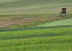 (:Linda:) Tags: field germany corn village hunting thuringia perch hochsitz get