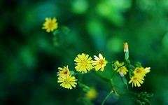 Small Flowers () Tags: 9028 teleelmaritm