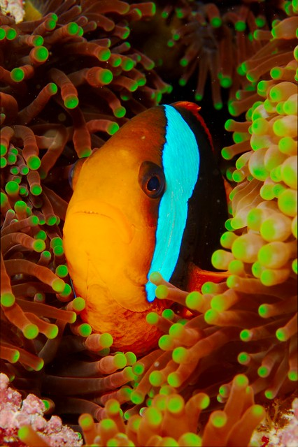 australia scuba diving queensland greatbarrierreef marinelife