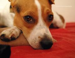 Keshabed (Zoilomalaga) Tags: dogs sigma perros foveon ipad dp2 snapseed