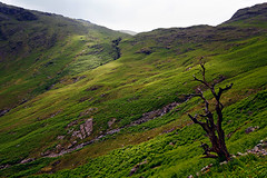 Greenness (mojo_black) Tags: tree lakedistrict cumbria wrynose