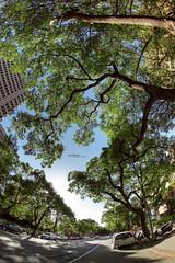 [urban] tree on the street (Taotzu Chang) Tags: street city blue urban tree green canon taiwan fisheye taipei hdr 815mm pooldodo