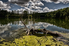 Les eaux sombres (Jerome Pouysegu) Tags: lake france nature landscape lac 5d paysage