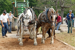 DSC01642 - Feel the Power...wow (archer10 (Dennis) (53M Views)) Tags: horses horse canada museum novascotia farm sony free competition fair driver dennis jarvis pulling weight newross iamcanadian freepicture dennisjarvis archer10 dennisgjarvis nex7 18200diiiivc