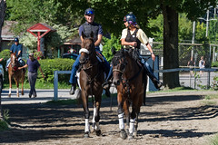 Heading out to the track (avatarsound) Tags: horse saratoga horseracing backside workout thoroughbred