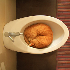 the egg (It cats two ways) Tags: sleeping cat bathroom cool donut neko bagno gatto bidet dorme thelittledoglaughed