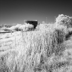lang-lang-1902-ps-w (pw-pix) Tags: wood winter blackandwhite bw plants tree strange metal mystery reeds ir concrete weird landscaping australia victoria structure pole wires round infrared unusual roadside rushes shrubs circular gravel electricitypole verticals langlang electricitywires southgippsland mcdonaldstrack deliverypoint2 irmodifiednikon1v1