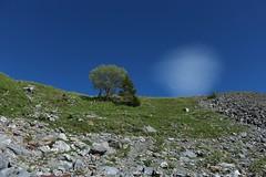 arbres et lenticulaire (bulbocode909) Tags: nature suisse vert bleu arbres nuages paysages rochers valais montagnes salenfe