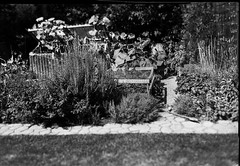 tilt try out 3 (salparadise666) Tags: busch pressman c 2x3 wollensak 101mm tilt f8 125 sec fomapan 100 sheet film caffenol rs nils volkmer germany garden experiment vintge camera analogue