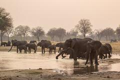 Dusk at the pan (Hector16) Tags: africa makaloloconcession safari linkwashaconcession hwange littlemakalolocamp 2015 zimbabwe littlesomavundhlapan matabelelandnorth zw loxodontaafricana elephant africanelephant herd dusk