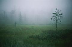 Fog at Vottovaara`s swamps, Karelia, Russia (Iurii & Natali) Tags: karelia fog myst russia summer swamp tree green dark film velvia fuji color slide chrome vintage analogue nikon f80