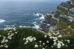 Ireland (Vilmos Folk) Tags: aerial view beauty nature blue cliff coastal feature coastline day flower growth high angle idyllic nonurban scene outdoors plant rock formation scenics sea shore tourism tranquil tranquility vacations water wildflower comments outdoor