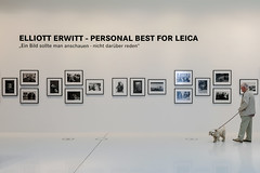 this dog was only interested in Erwitts dog pictures (Werner Schnell Images (2.stream)) Tags: ws leicagalerie leicapark leica leitz wetzlar ausstellung exhibition elliot erwitt dog hund