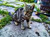 Silvestro (Nino Fogliani 58) Tags: gatto micio silvestro foto animali felini felix chat