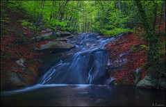 Per la fageda (antoniocamero21) Tags: agua hayas hojas primavera atardecer cascada corriente color foto sony montseny barcelona catalunya