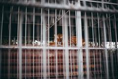 Barsik (plotkamusic) Tags: animal primal tiger cat kitty cell prison bar russia tver slave slavery