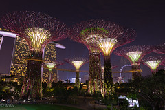 Garden by the Bay () (deslee74) Tags: night garden yahoo google nikon singapore flickr 24mm d800 nikond800 gardenbythebay