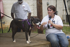 CarniBull 14 (venusnep) Tags: atlanta rescue june ga vintage d50 georgia for nikon nikond50 decatur bully fundraiser 2012 decaturga pitbullrescue atlantabullyrescue carnibull carnibullvintagefundraiserforatlantabullyrescue