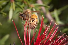 Hanging On (GPTPhotography) Tags: macro nature canon eos wildlife perth wa westernaustralia floraandfauna eos1d australianwildlife eos1dmkii perthwa