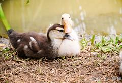 SWEET LOVE ( Nana) Tags: cute love animals nikon expression expressions taiwan lovely  sweetlove lovemetender i  d7000