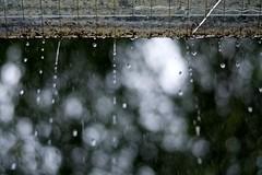 quand la pluie tombe (Fandral) Tags: pluie gouttes