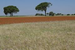 20090527_1123_1010536.jpg (m.vgunten) Tags: spain r1 laseras castillelamancha flickr2009 bikeespaa picasa2009
