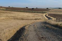 20090706_0818_1020801.jpg (m.vgunten) Tags: spain extremadura fuentedecantos flickr2009 bikeespaa picasa2009