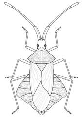 Syromastus rhombeus (Linnaeus, 1767) (lofaesofa) Tags: insect linedrawing inkscape coreidae hemiptera vectorillustration biologicalillustration heteropera syromastusrhombeus dorsalhabitus syromastusrhombeuslinnaeus1767