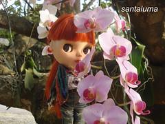Aisha e as flores!!