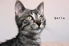 Berta (ainara.irazabal) Tags: animal cat feline berta gato gata felino desaturated katze animais tier    felinosbilbao