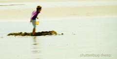 Summer Haze (Shutterbug Sheep) Tags: summer beach water bucket haze sand south sandcastle shields