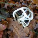 White basket fungus - Photo (c) Jon Sullivan, some rights reserved (CC BY-NC)
