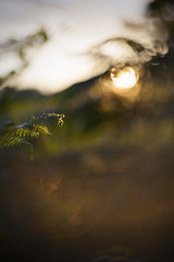 (drfugo) Tags: light sunset england fern sussex countryside bokeh flare canon5d simple minimalist helios44258mmf20