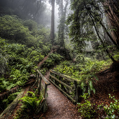 the mossy path to your foggy heart | marin county, ca (elmofoto) Tags: bridge trees green nature northerncalifornia forest landscape coast moss woods nikon fav50 path hike redwood norcal tamalpais ferns hdr pf 500v gettyimages d800 1000v fav25 fav100 2000v 2500v fav150 fav75 1424mm nikond800 fav125 elmofoto lorenzomontezemolo wwwelmofotocom