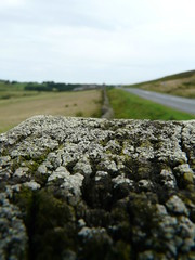 Along the fence (gregwake) Tags: rural countryside countydurham dmcfz18