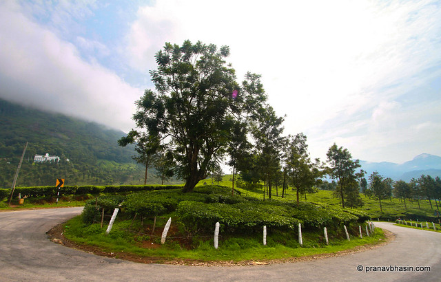 Driving Around Tea Gardens In Munnar, Kerala