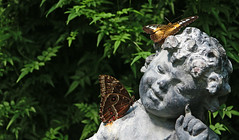 KISSED BY A BUTTERFLY (craftedfromtheheart) Tags: hot statue butterfly wings butterflies