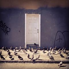 (davidteter) Tags: sanfrancisco pigeons tenderloin olivestreet stream:timeline=linear instagram pigeonalley appleiphone4s
