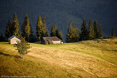 Mountain hill at sunset (nickolay_khoroshkov) Tags: wood travel sunset summer sunlight house mountain tree green nature field grass sunshine pine rural forest woodland landscape countryside scenery top hill scenic meadow sunny ukraine highland valley recreation mountainside carpathian