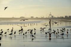 peace (luana183) Tags: surf mare porto pace acqua riflessi gabbiani oceano portogallo