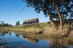 Afternoon Walker (Dobpics O'Brien) Tags: road victorian rail railway healesville victoria railcar walker valley yarra railways vr donovans 22rm