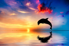 Beautiful ocean and sunset, dolphin jumping (lisame0511) Tags: sea dolphin ocean romantic sunrise sunset sky red aquatic wildlife nature calm jump wild figure outline profile silhouette swimming mammal animals tropical bottlenosed jumping life horizontal oceanview bottlenose waters water summer mirror orange tail seascape blue concept conceptual new hope age metaphor unitedstatesofamerica