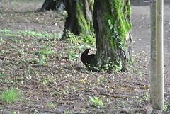 DSC_3351 (mavnjess) Tags: 15 june 2016 vicenza italy italia coniglio coniglios rabbit rabbits bunny bunnies