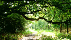 Woodland (tad2106 - Trudie Davidson Photography) Tags: wood sun glade sunny trees forest walk footpath