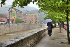 Sarajevo sous une pluie printanire (Vincent Rowell) Tags: raw tonemapped balkans2016 bosniaandherzegovina rain sarajevo cityhall river miljacka