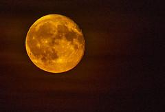 Waning Gibbous of the Sturgeon Moon (David Montesino) Tags: longbranchwashington keypeninsula moonrise tacoma washington usa