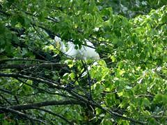 Bayard Cutting Fields Arboretum (76) (pensivelaw1) Tags: suffolkcounty newyorkstate longisland bayardcuttingarboretumstatepark