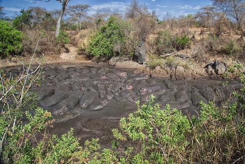 Hippo pool Seronera-3