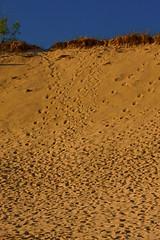 Warren Dunes State Park Michigan 7392 (www.cemillerphotography.com) Tags: sand hills westernmichigan harborcountry sawyer marramgrass forest lakemichigan greatlakes wind waves water interdunal wetlands swamps pools ponds plants shoreline freshwater beach foredune linear parabolic transverse landscape sculpted bluff perched blowout backdune erosion bluestem cottonwood lagzone glacial moraine deposit